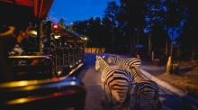 Foto: Chiang Mai Night Safari