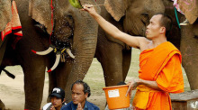 Foto: ElephantAsia