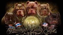 Pattaya Bully Expo 2019
