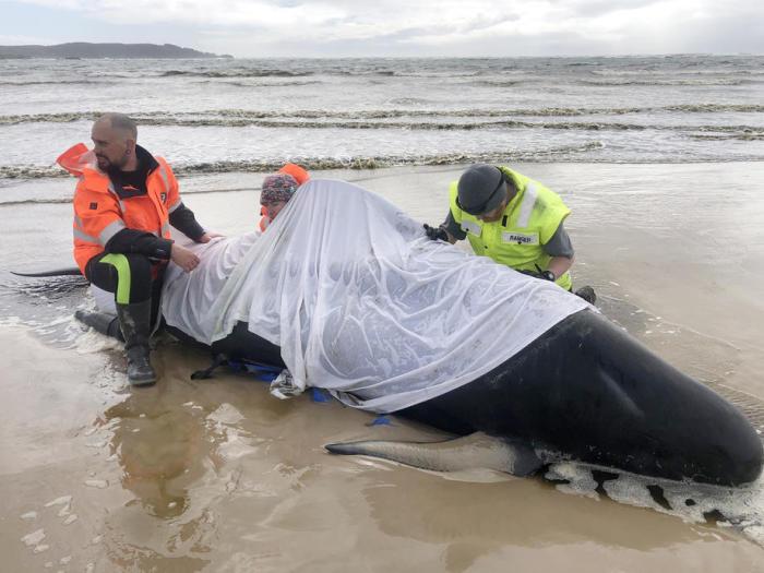 Gestrandete Wale 2021