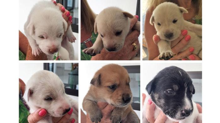 Dringend: Hundebabys zu verschenken, Thailand, Pattaya
